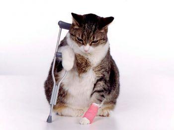 Free crutches